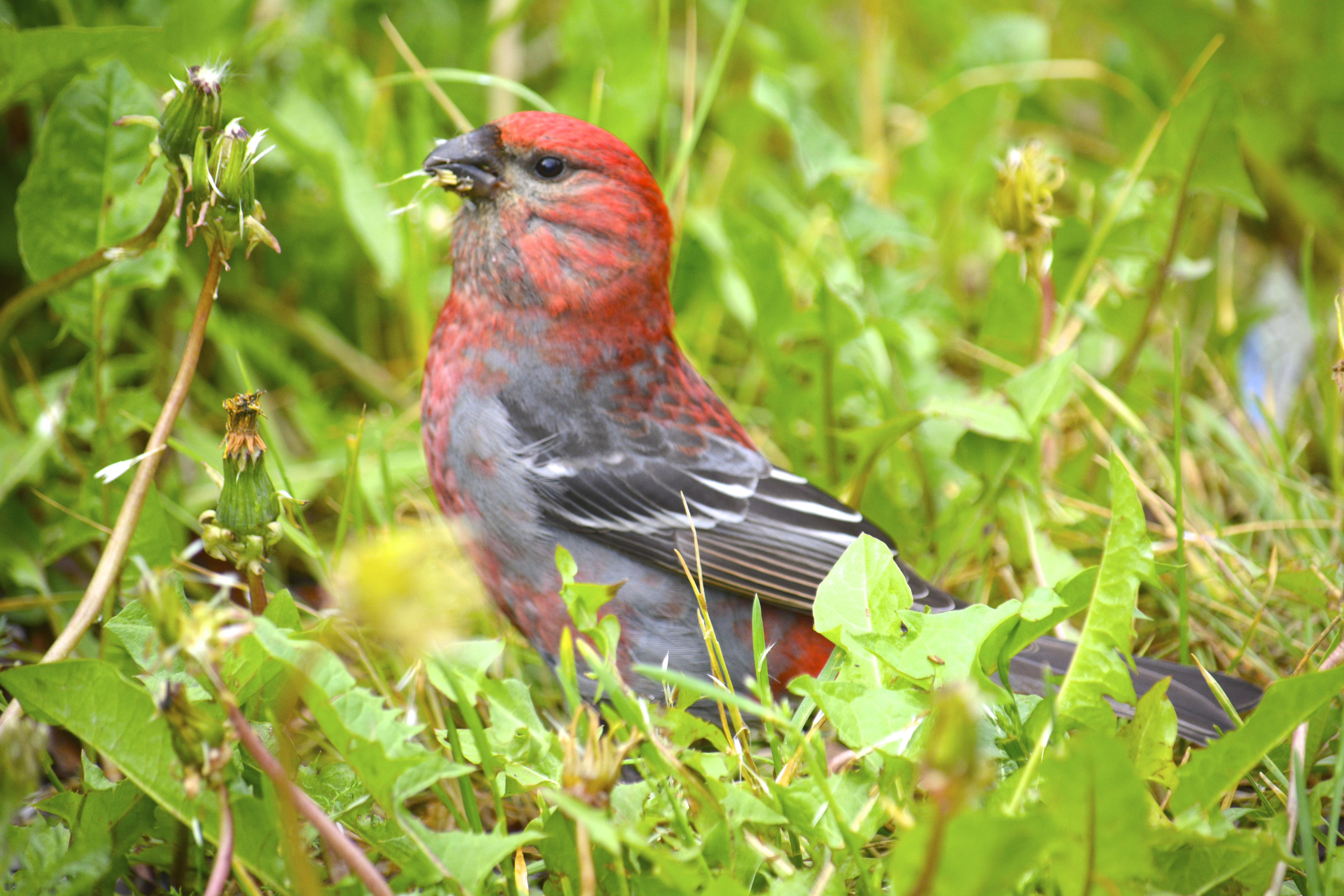 Innovations Have Changed Birding In Many Ways Including Our Methods For Tracking Migrations Viewing Birds And Even The Way Birders Communicate With One