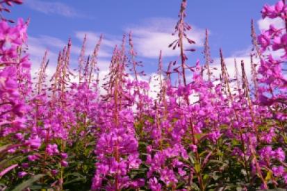 Simple pleasures of summer - flowers